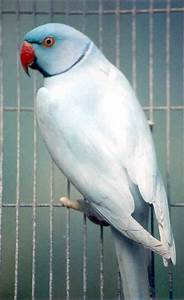 Outback Aviaries