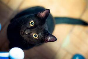 Why Are Black Cats Considered Unlucky? PEOPLE com