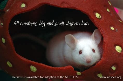 9 best images about Adoptable Small Animals on Pinterest