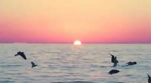 gif summer birds landscape water nature sunset shandilee •