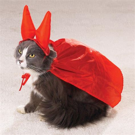 costumes for cats 15 hilarious cats in costumes kitty bloger