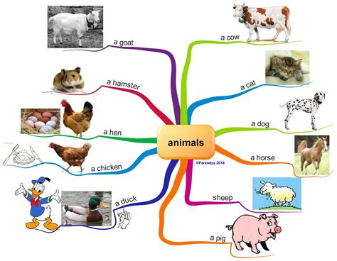 Modification En Anglais by Animals F Anglais