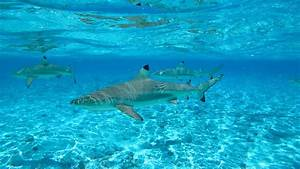 Viajes a Isla Bora Bora 2017: Paquetes vacacionales a Isla Bora Bora, Polinesia Francesa