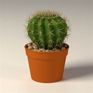 3d model of cactus pot