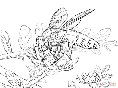 coloring pages  honey bees coloring home