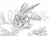 Bee Honey Coloring Pages Giant Bees Printable Drawing Imkerei Popular sketch template