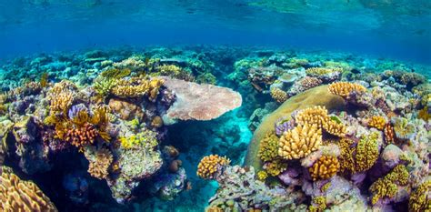 great barrier reef  feature  unesco danger list