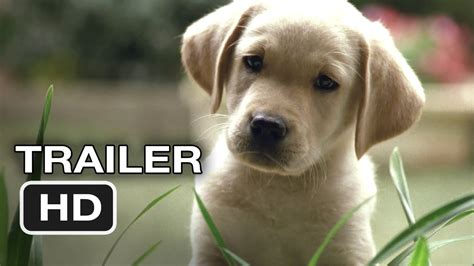 quill  life   guide dog official trailer