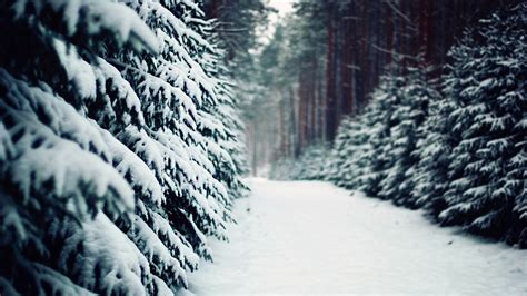 landscape advertising snow road in the forest winter scenery hd wallpaper