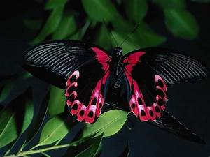 Butterflies images Beautiful Butterflies HD wallpaper and ...