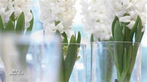 Hyazinthen Auf Glas