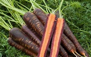Purple carrots launched in supermarkets by 23-year-old ...  Purple