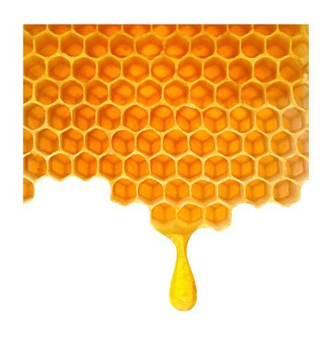Honeycomb clipart transparent, Honeycomb transparent ...