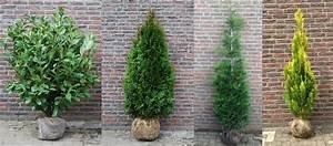 Quels Arbustes Pour Une Haie : les diff rents sortes de haies ~ Premium-room.com Idées de Décoration