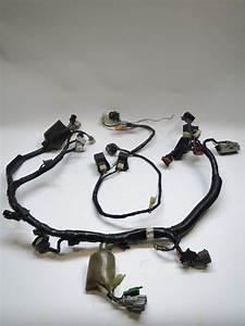 Main Wiring Harness Honda Cbr600f4i 2002