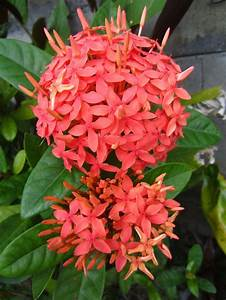 17 Best Images About Exotic Plants And Flowers On