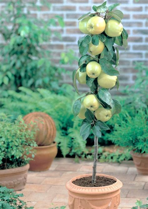 Growing Fruit On The Patio And Small Garden. Southern Living Outdoor Patio Furniture. Kreg Patio Table Plans. Patio Furniture Cushions How To Make. Patio Tables And Chairs Target. Patio Dining Sets At Costco. Outdoor Furniture Clearance Sales Uk. Ideas For A Tiny Patio. Porch Swing Glider Free Plans