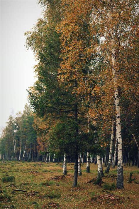 Engures ezera dabas parks rudenī - Sievietēm - Māmiņu klubs