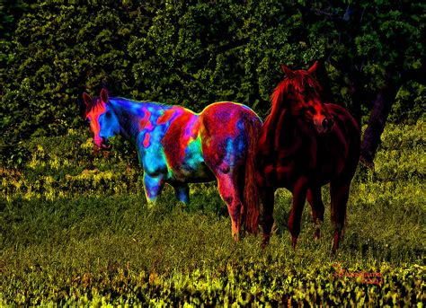 blind ericamaxine horse photograph 10th uploaded october which fineartamerica
