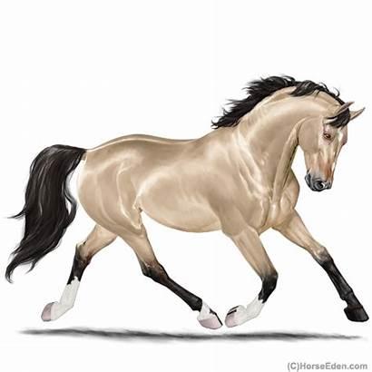 Horse Eden Buckskin Warmblood Stallion Short Zenith