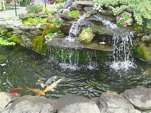 Waterfall Pond with Koi Fish - Contemporary - Landscape