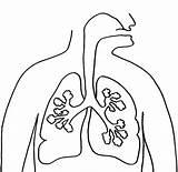Lungs Coloring Human Lung Anatomy Template Printable Lego Getcolorings Du Getdrawings Choisir Tableau Un sketch template