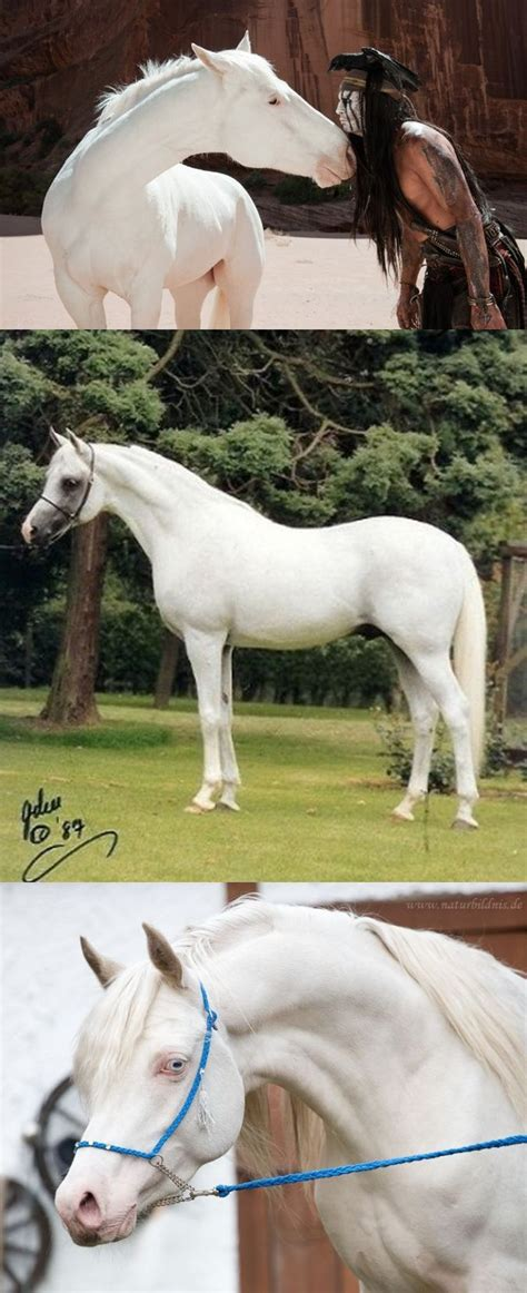 horse horses skin pink grey born except any eyes exist does dark pigment arabian wikipedia colors most pale patches very