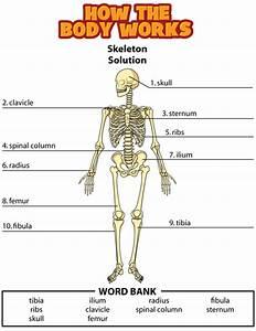 Answers  Bones