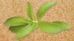 Stevia 'natural' sugar substitute - food and drink