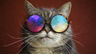 Cool Cat 4k Glasses Painting Wallpapers 1080