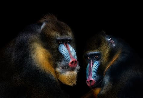 finalists  smithsonians  annual photo contest