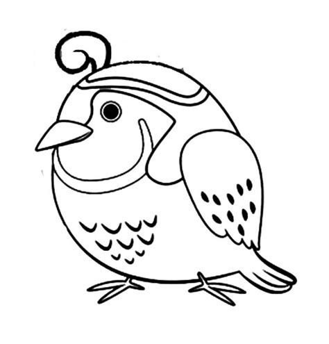 quail coloring pages  coloring pages