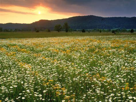 livada cvijeca pozadineinfo najbolje pozadine za desktop