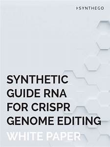 Synthetic Guide Rna For Crispr Genome Editing
