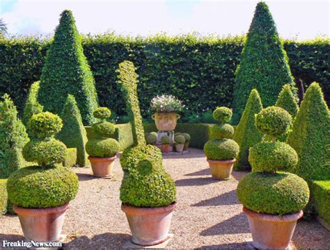 Funny Topiary Pictures  Freaking News