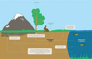 The Phosphorus Cycle   Earth Science   Visionlearning