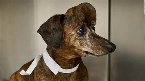 dog lost part   skull  cancer  researchers