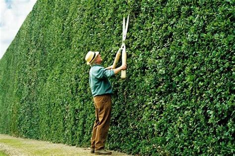 guide  planting hedges  diarmuid gavin mirror