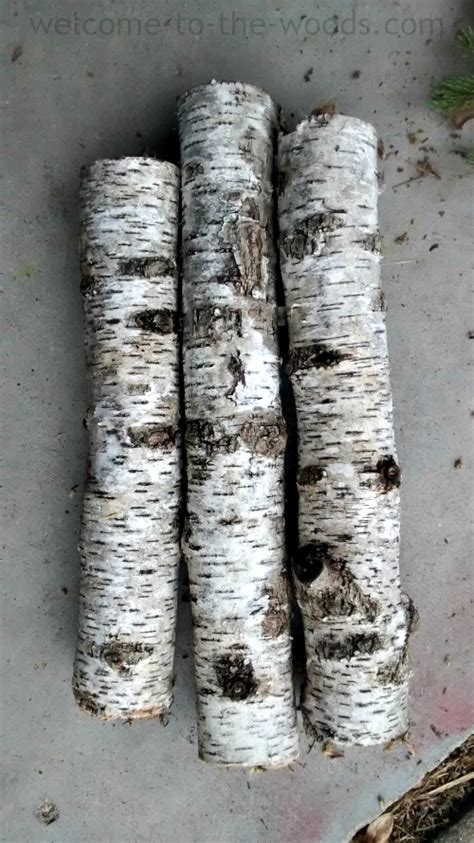 birch tree christmas diy decor    woods