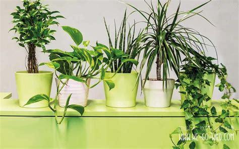 Pflanzen Im Zimmer by Pflanzen Im Schlafzimmer 9 Luftreiniger Helfen Beim Schlafen