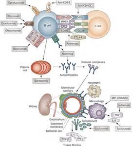Lupus Nephritis; Glomerulonephritis, Lupus; Lupus Glomerulonephritis ... Lupus Nephritis