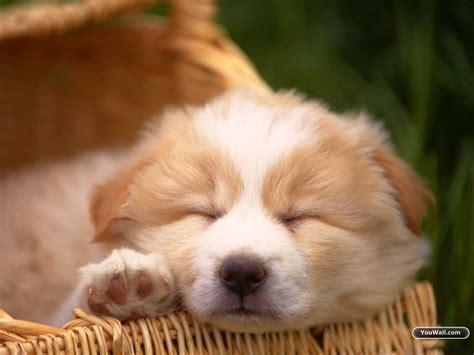 cute dog wallpaper high quality earthly wallpaper p