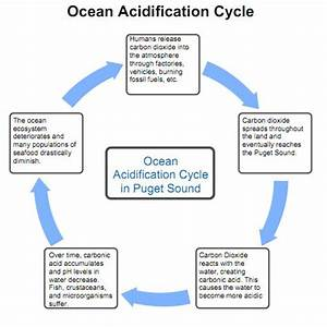 Ocean Acidification Cycle Diagram