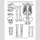 Human Body Systems For Kids Worksheets | 612 x 792 jpeg 66kB