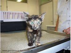 Tiervermittlung, Katzen, Babykatzen, Katzenbabys, Katze