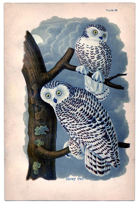 instant art printable lovely snowy owls  graphics fairy