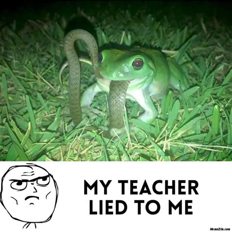Frog Memes - MemeZila.com