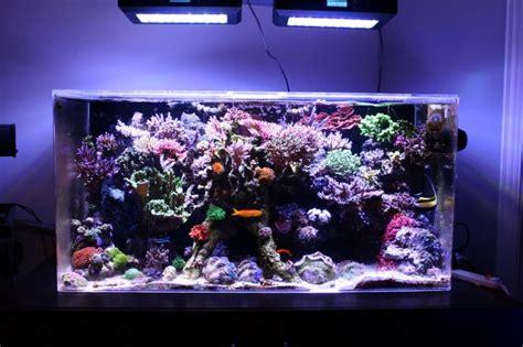 aquarium 500l pas cher recifal puissance leds pour un 1000l l 233 clairage