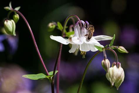 kostenlose foto natur bl 252 hen wei 223 fotografie blume bl 252 tenblatt botanik garten flora