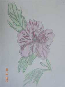 Art: Pencil Drawings - Flowers